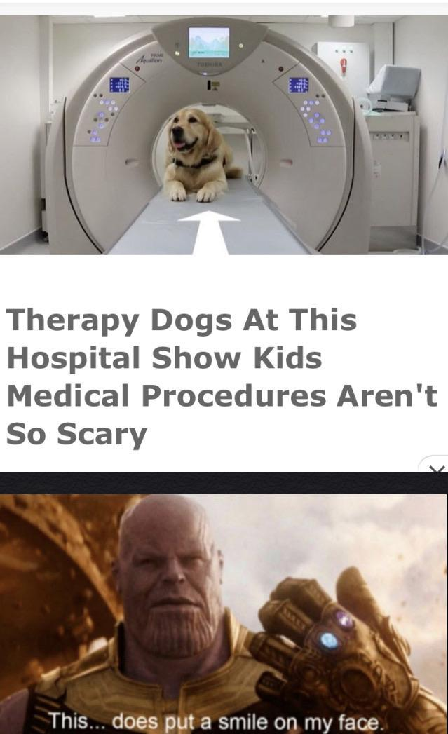 Therapy dogs at this hospital show kids medical procedures aren't so scary - meme