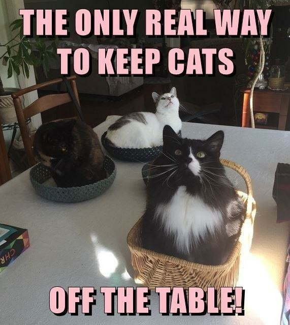 Cat traps - meme