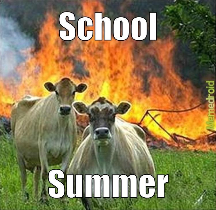 gotta love summer - meme