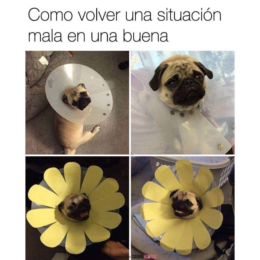 Siempre positivo - meme