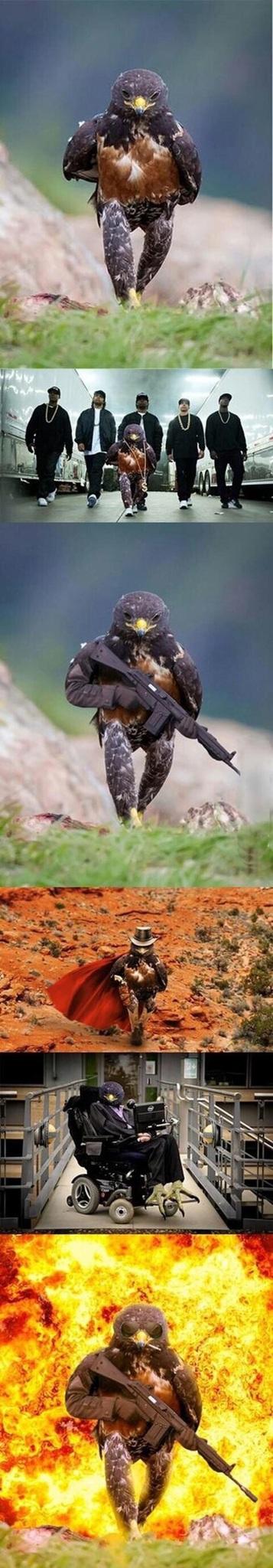 Se o Chuck Morris tem um Pássaro - meme