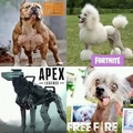 Cachorro de cada jogador