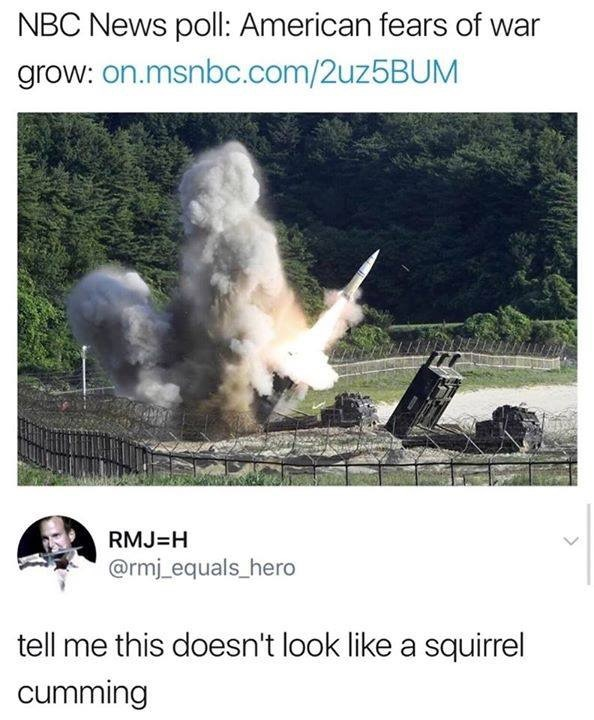 squirrel - meme
