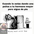 Bonito Gato Verdad?