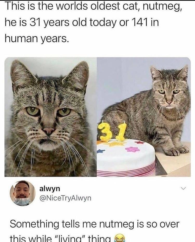 nutmeg - meme