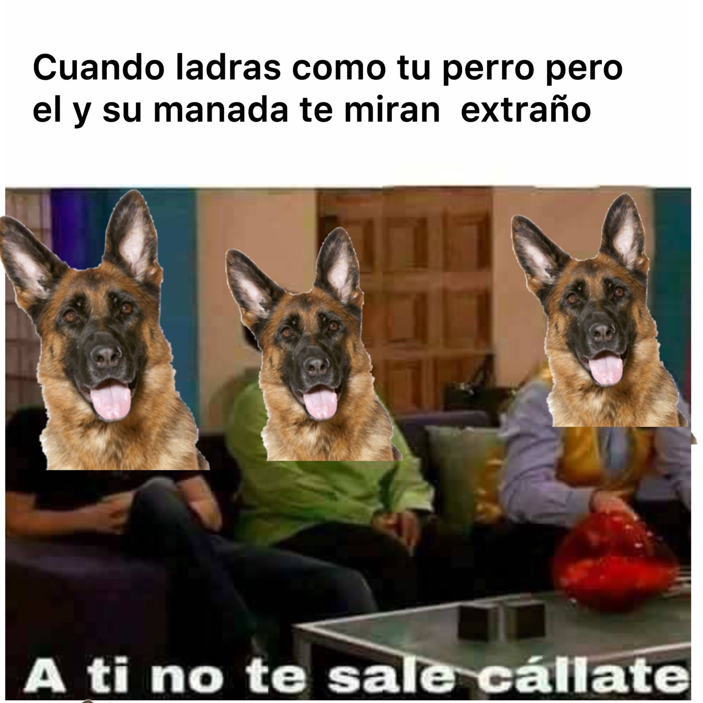Todos los perros son iguales - meme