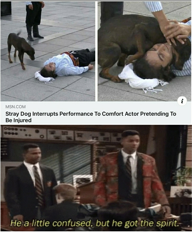 Stray dog interrupts performance to comfort actor pretending to be injured - meme