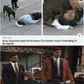 Stray dog interrupts performance to comfort actor pretending to be injured