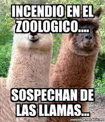 Zoo - meme