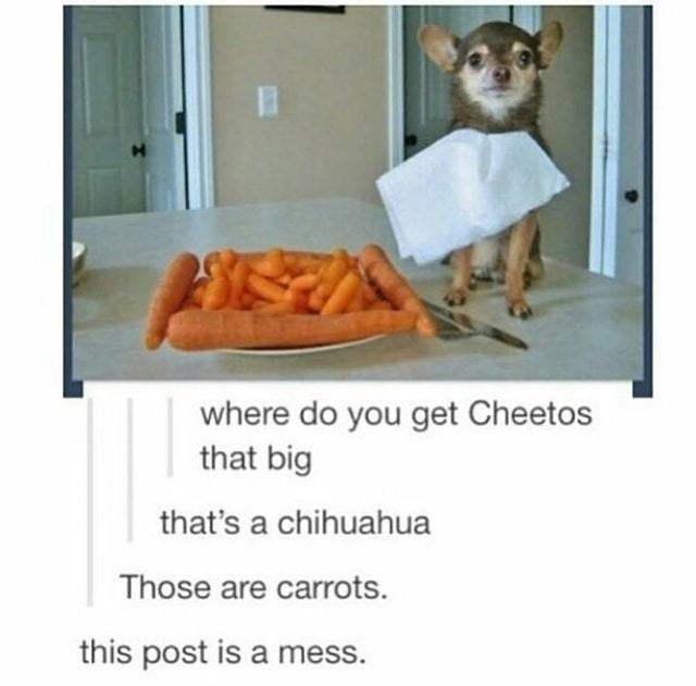 Big Cheetos and a Chihuahua - meme