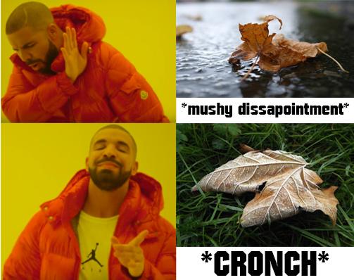 Autumn satisfaction - meme