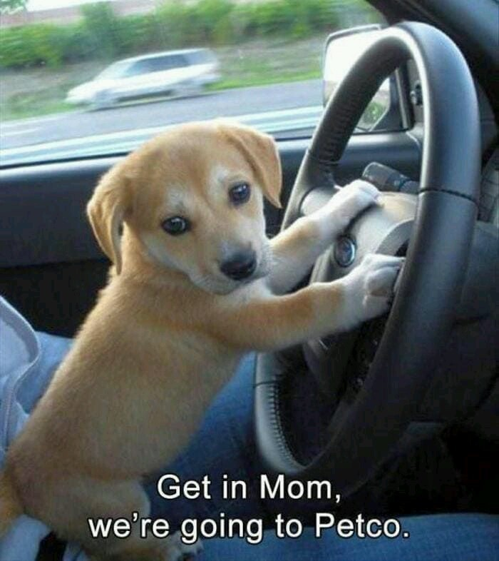 Cute puppy dog going to the shops - meme