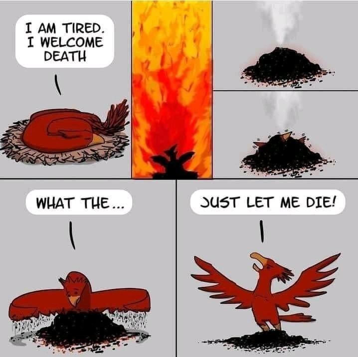 Oiseau rouge - meme