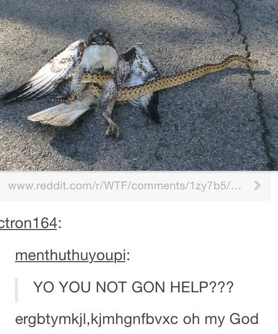help him!!! - meme