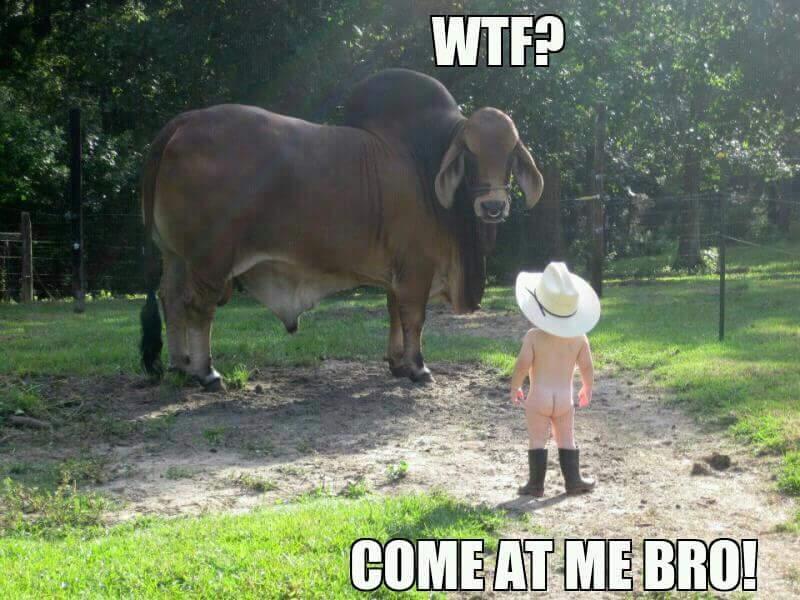 Come at me bro *fisticuffs* - meme