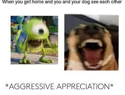 Dogs when to much fun - meme