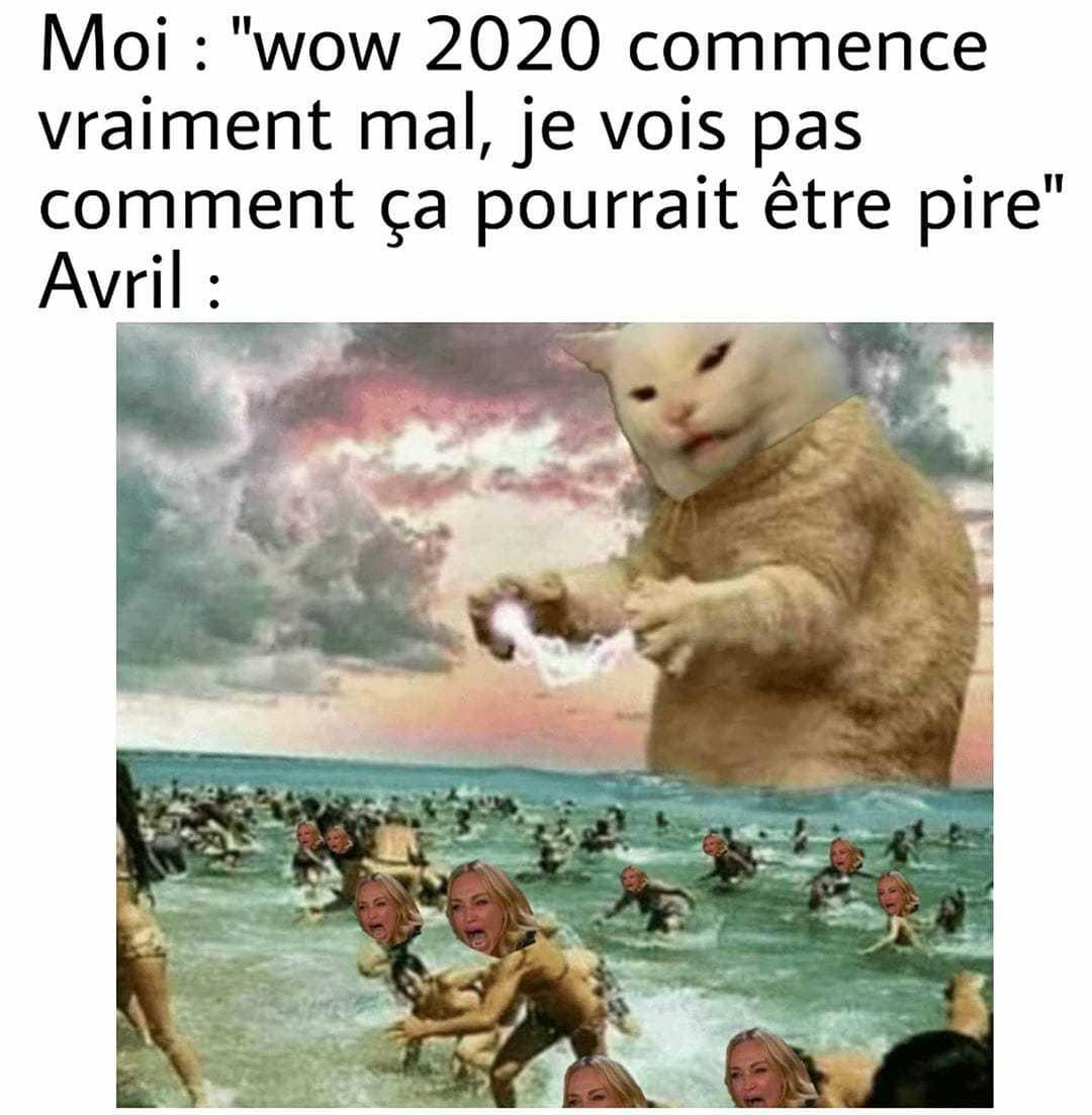 Attack of cat - meme