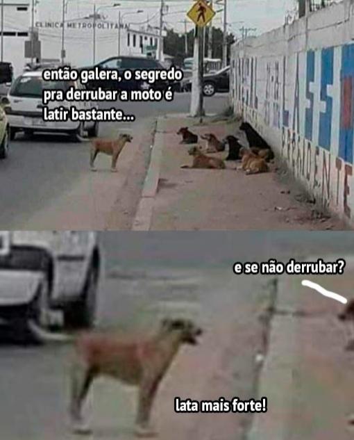 Catiorro - meme