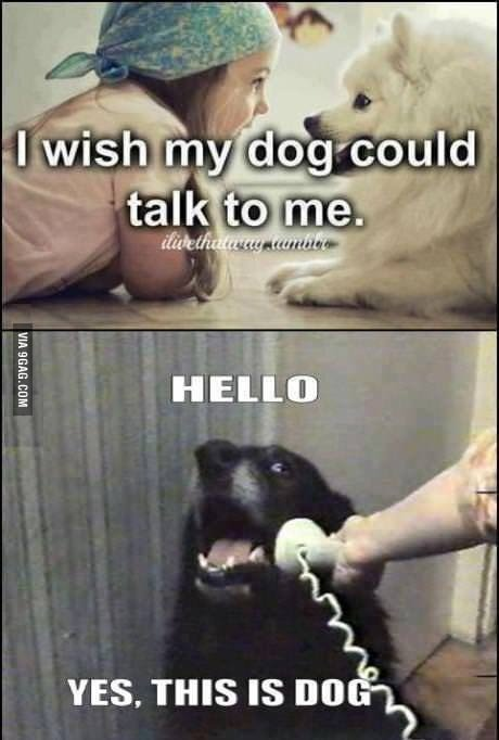 I wish my dog could talk to me - meme