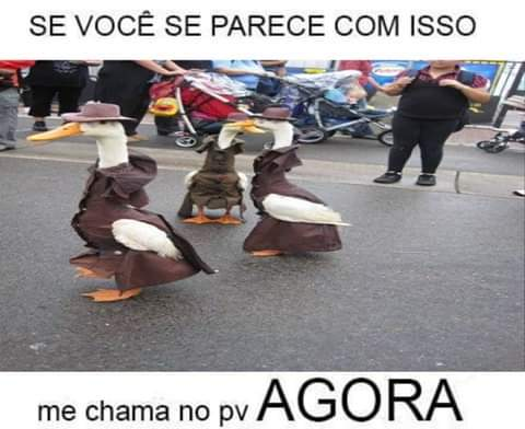 Patos detetives - meme