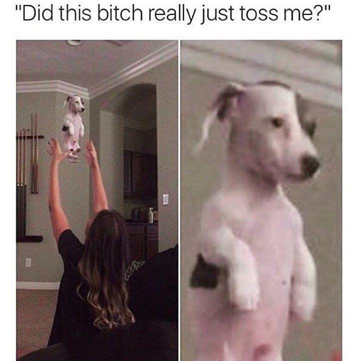 Poor dog - meme
