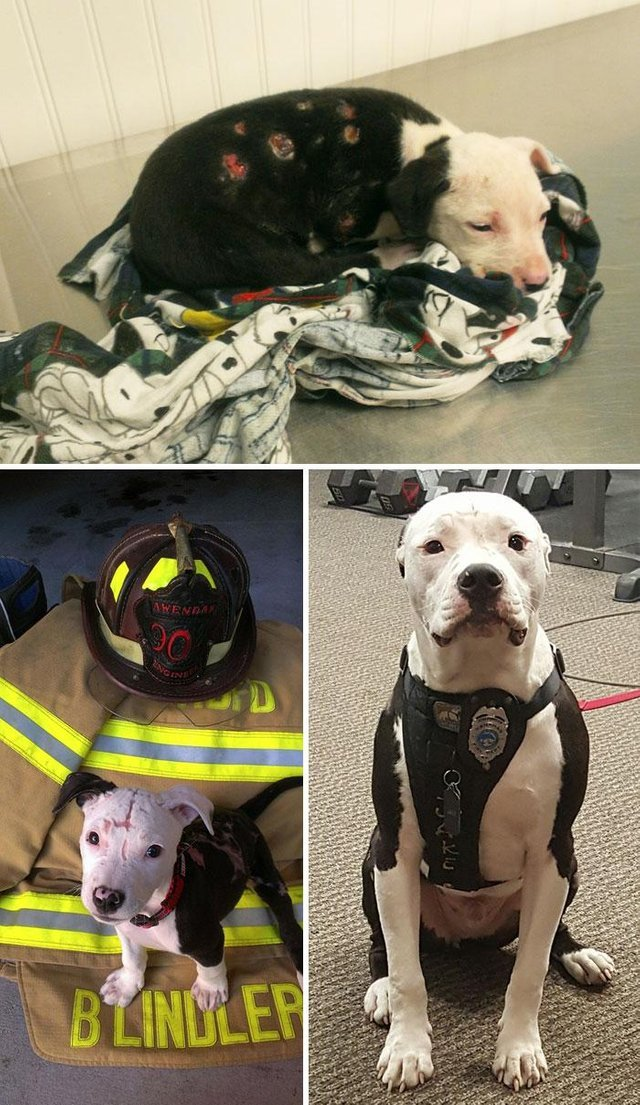 A puppy saved from a fire becomes a firefighter - meme
