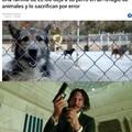 Negligencia veterinaria