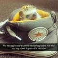 So cute, not my hedgehog though