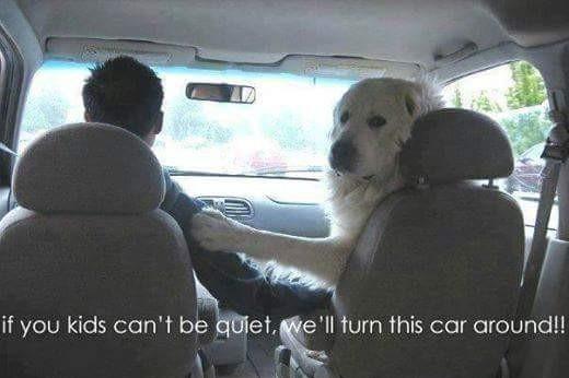 DoggoMommo - meme