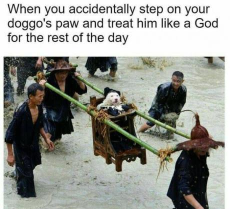 It was an accident! - meme