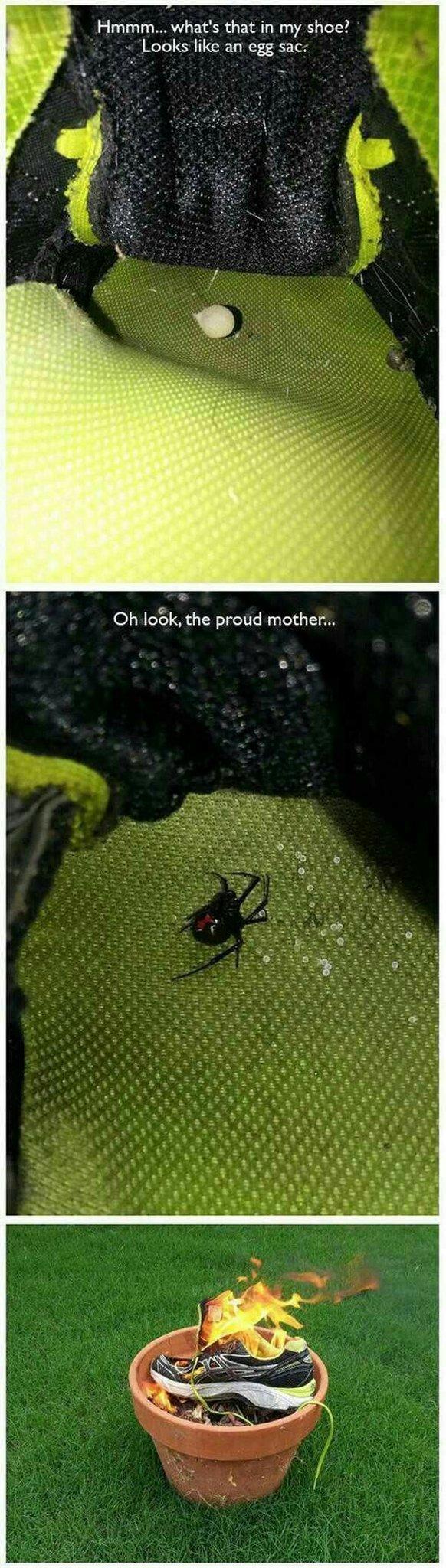 Itsy bitsy araña - meme