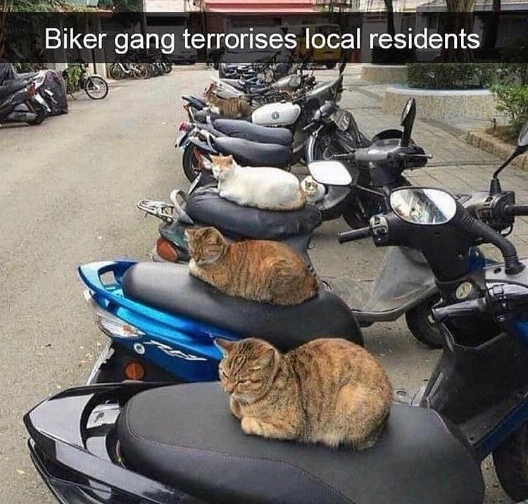 cutest biker gang - meme