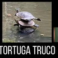 Tortuga Truco
