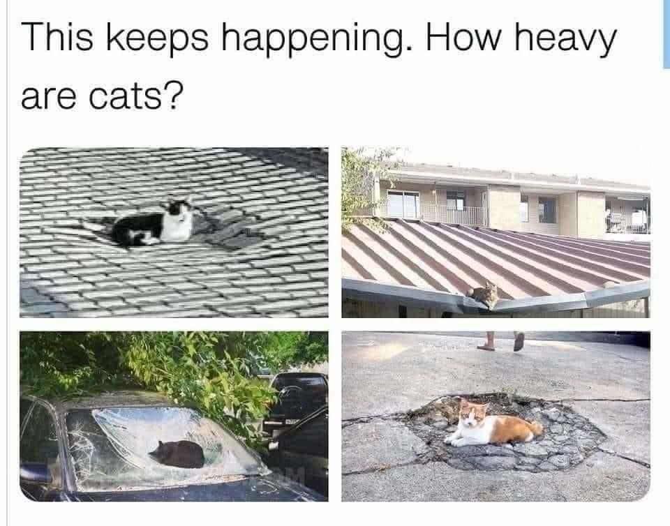 cat meteors - meme
