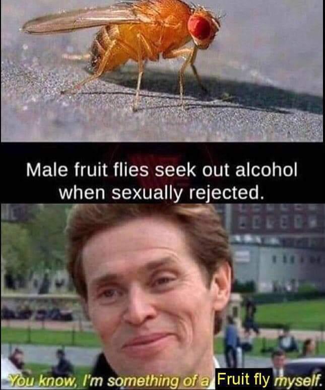 OP luvs booze - meme