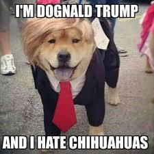 I'm Dognald Trump - meme