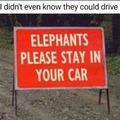 elephants in cars