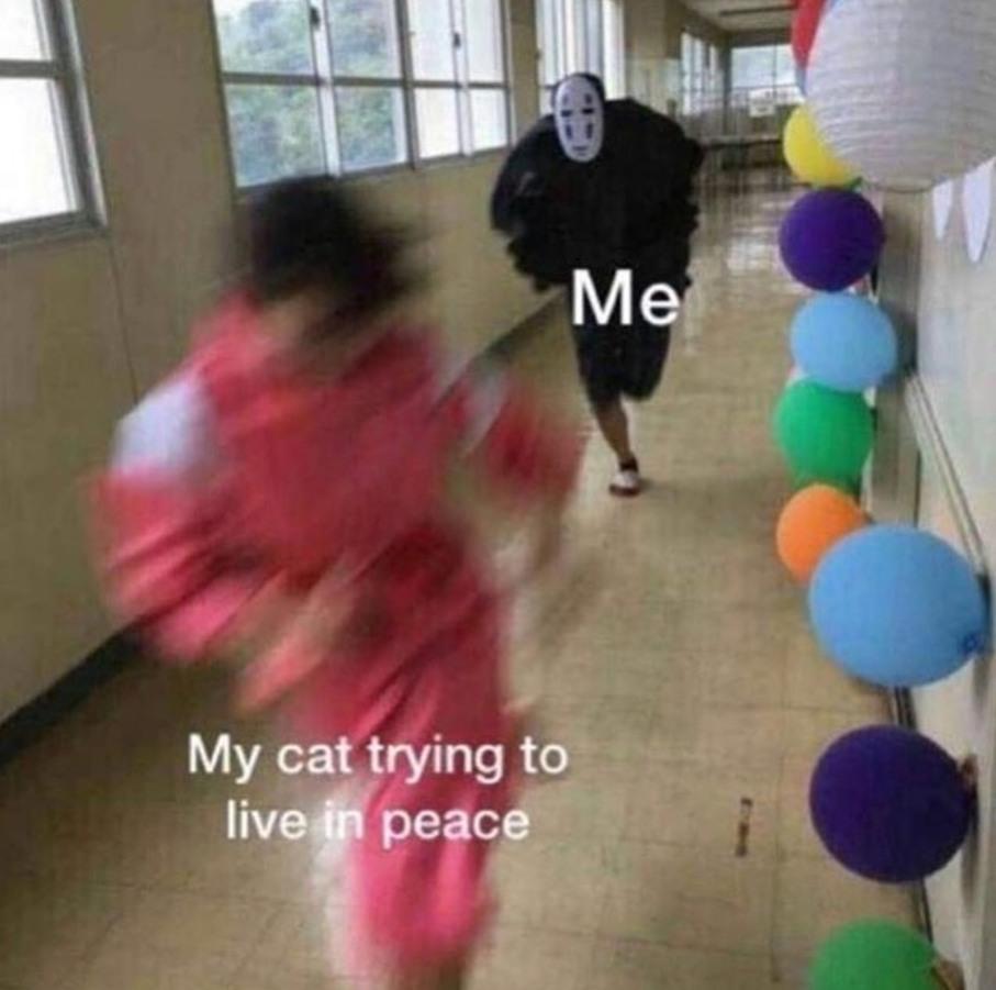 Putain d'chat - meme