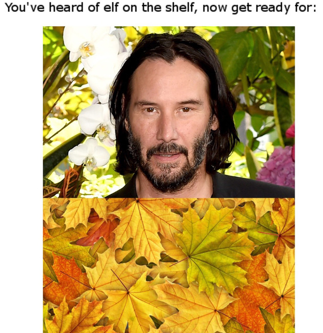 Reeves in the leaves - meme