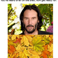 Reeves in the leaves