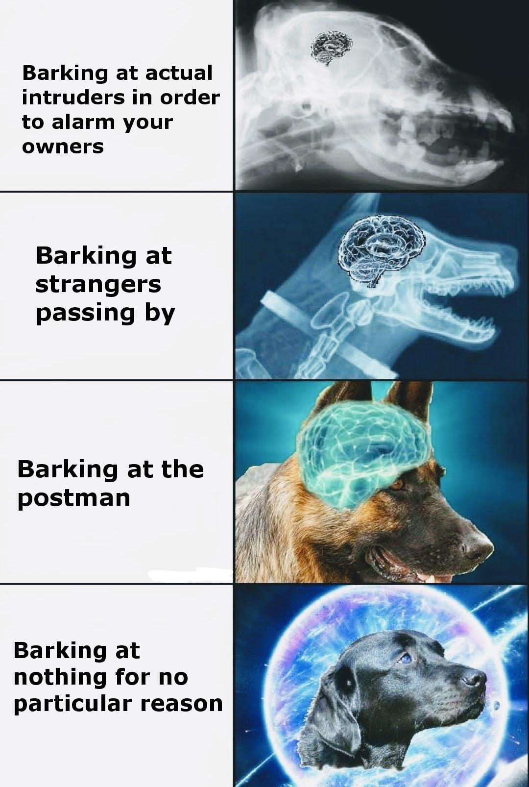 Evolution of dog brain - meme