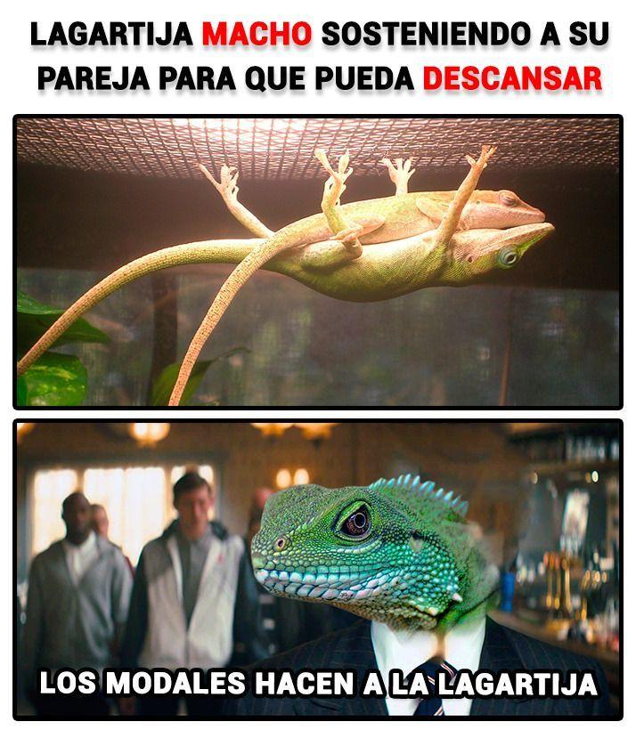 las lagartijas - meme