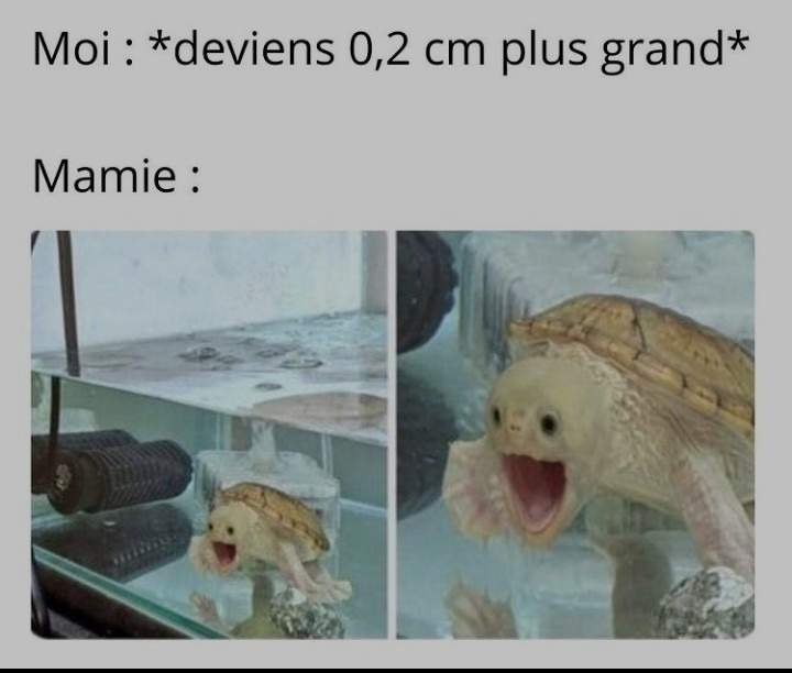 Yess - meme