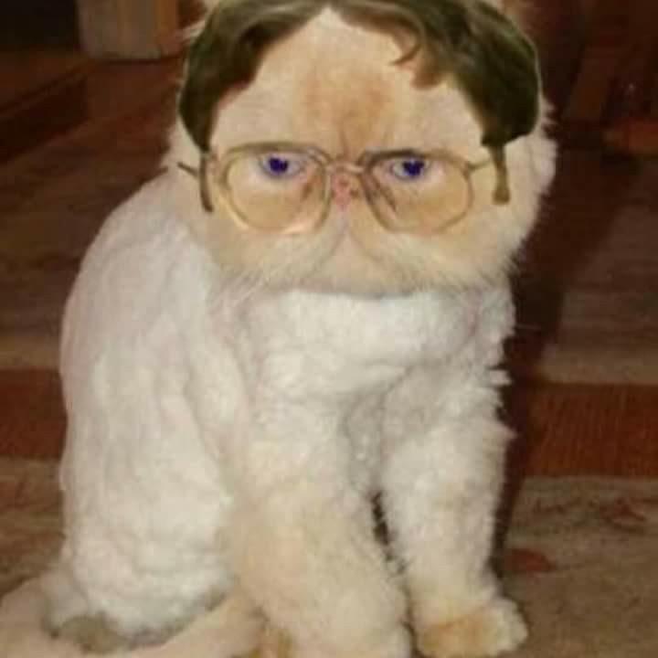 The Best The Office Cat Memes Memedroid