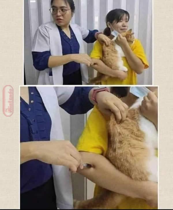 Veterinário EaD - meme