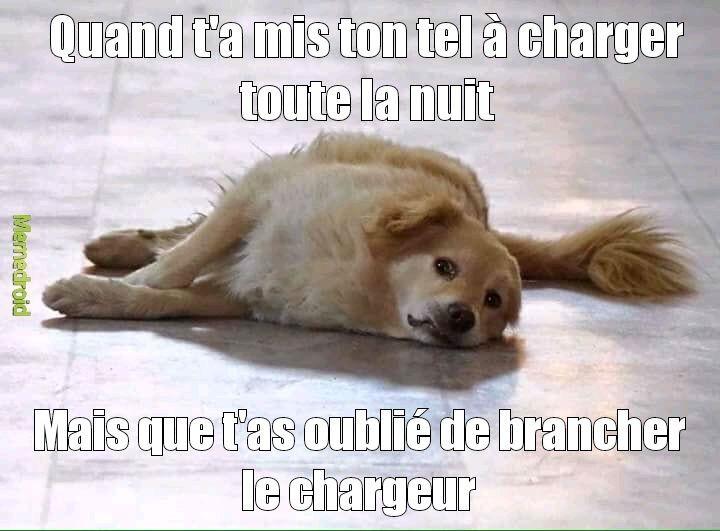 Sniff Doggo - meme