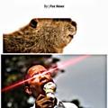 Beaver lickin good