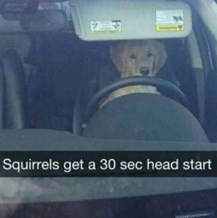 Squirrels - meme