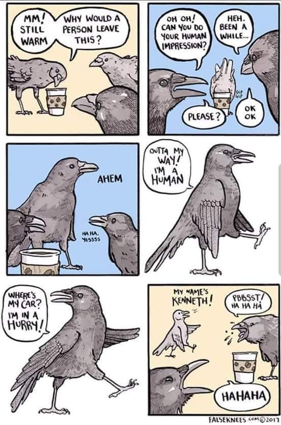 I always thought a crow would be a cool pet - meme