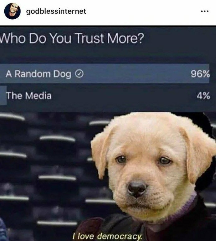 Dogs > media - meme